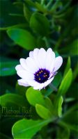 White Flower III by MichaelNN