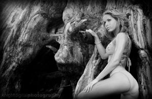 Knotty Pine by KnightDigital