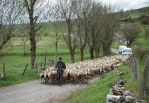 transhumance by rhipster