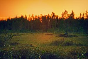 Sunset over mire by Flaeger