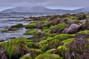 Green Stones 2 by CitizenFresh