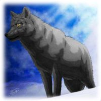 Black Wolf by SheltieWolf