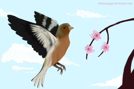 little chaffinch by ForlornPuppy
