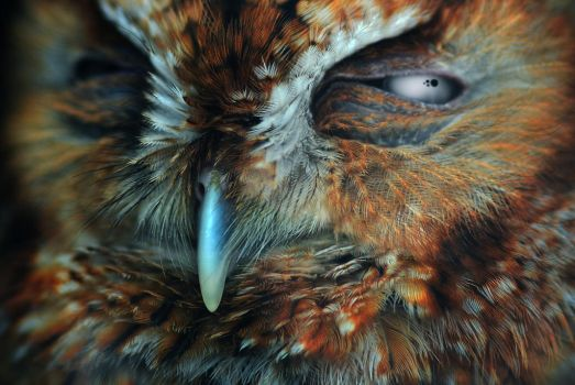 Baby Horned Owl by Blaklisted