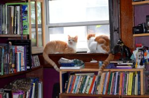 Library Cats 2 by coffeenoir