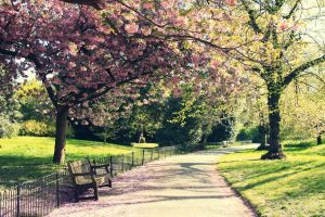 Spring in London by sacadura