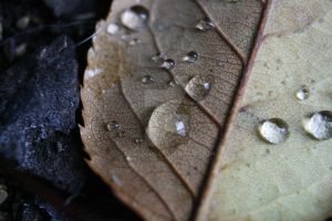 water droplets4 by Elvis3000