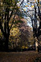 An Autumn day in Forli XIV by SilvieTepes