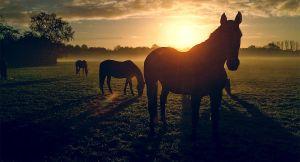 Horses by b13visuals