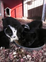 Rescue Work - Foster Puppies by LilleahWest