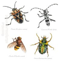Insects by saraquarelle