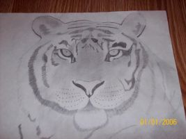 art project - Tiger's face by scarcrow27