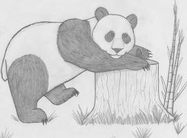 Panda Bear by 151blazingangels