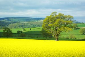 Rapeseed and the Oak by Hitomii