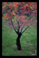 Fall colors by ntora