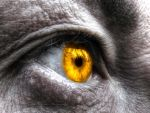 Eye of the all-seeing by Floreina-Photography