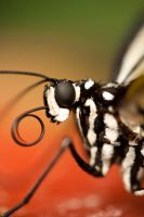 butterfly 13 by GerbenT