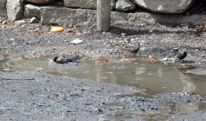 Bathing In the Muck Puddle by Miss-Tbones