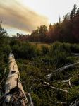Dead Log and Forest Fire Smoke by AFL