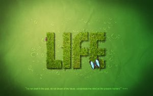 Green Life by ToGa-Design