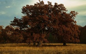 breite oak autumn by blackasmodeus