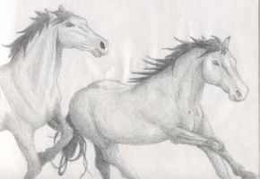 Pencil horses by mareritt