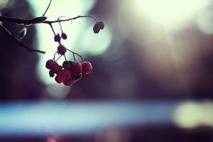 Winter. by SoraBelle