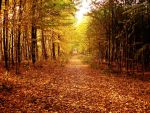 Autumn forest by Smile-Denise