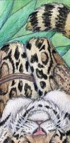 Clouded Leopard Bookmark by autumnjaguar