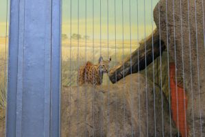 zoo Pic_16 by Mustang-Heart