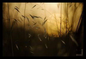 Hay in Sunset II by ntora
