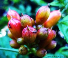 Fruit-pl-ant by LeMavrica
