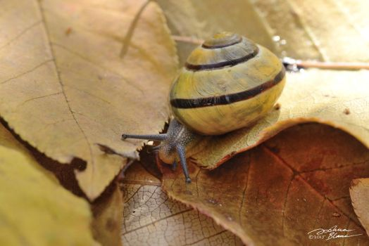 Banded Forest Snail on Fall Leaves 2 by themanitou