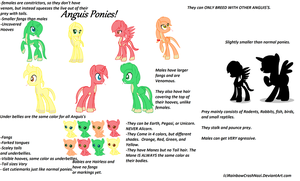 NEW PONY SPECIES! {READ DESCRIPTION!} by SNlCKERS