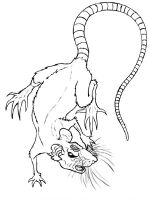 Shadow Rat Tattoo-Rough Sketch by Dante-sComedy