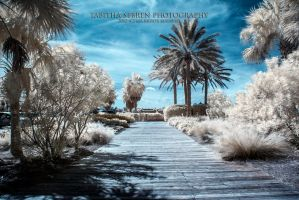 Infrared Florida by TabithaS-Photography