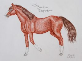 NCS Boundless Independence by Salvada
