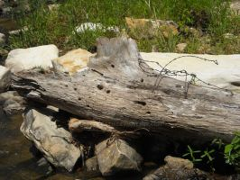 Rocky Falls- Driftwood by celticpath