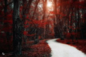 road to walk by ildiko-neer