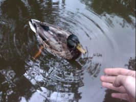 Duck, Hand. Hand, Duck. by SuccubusAlice