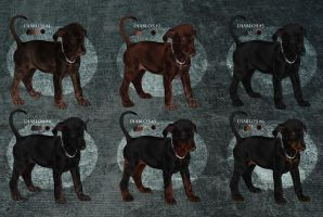 CLOSED - European Dobies (National titled) by Maranez