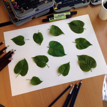 Real Leaf illusion drawing by AtomiccircuS