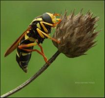 life contrasts by Insect-Lovers-Club