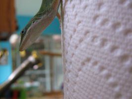 Survivor Anole by toenolla