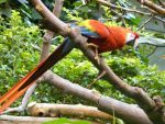 Red Macaw by Cloud9Necco