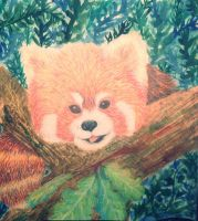 Little red panda by Barbarian--Warrior