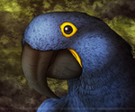 The Hyacinth Macaw Project by bladebandit