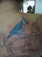 Blue bird detalhe by Juliano-Pereira