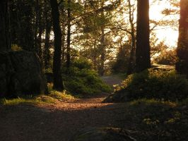 evening forest by doko-stock