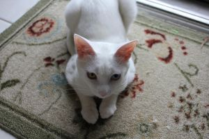 white cat in color 2 by bobbyfufu